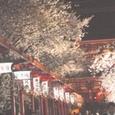 浅草、仲見世の夜桜