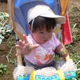 河津さんの畑でサヤエンドウ収穫。帆~たんもお手伝いね!