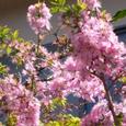 小桜です。