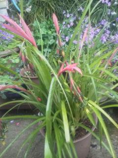 nyar -nyarさんに戴いた花です。
