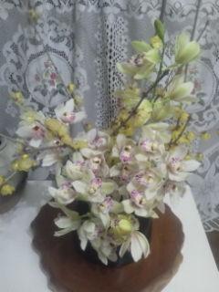 庭の蝋梅と裕文の咲かせた、シンビジューム