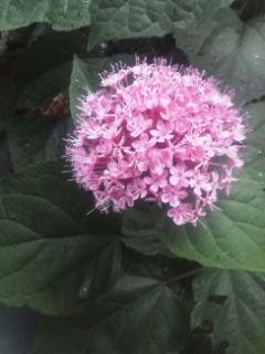 nyarさん、この花の名前忘れました。